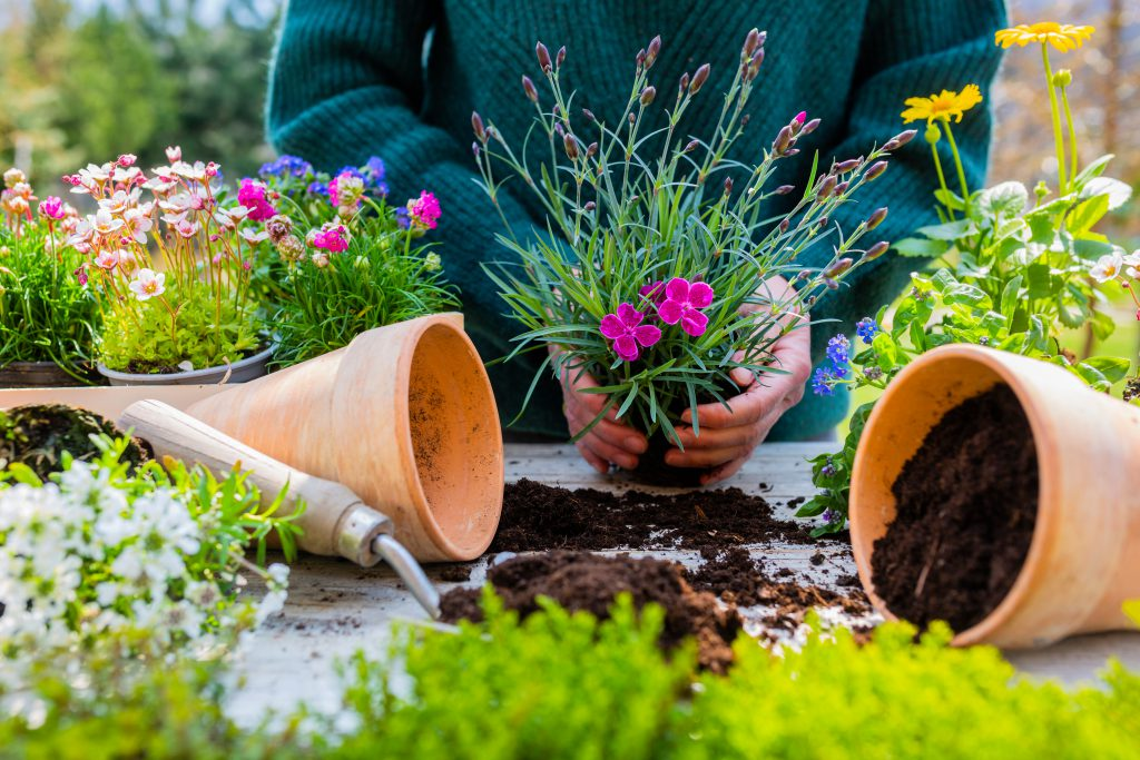 Flower lovers and gardeners